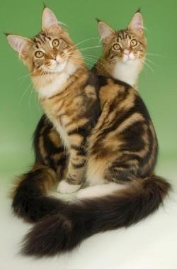 Кішка - священна тварина. Значення і вплив кішок