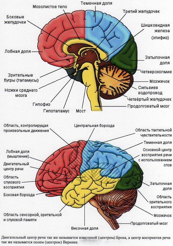 Порушення когнітивних функцій (пам`яті, мови, сприйняття)